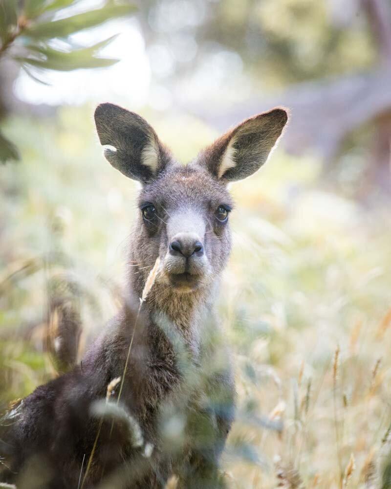 The Bushrangers Bay walk - one of the ...