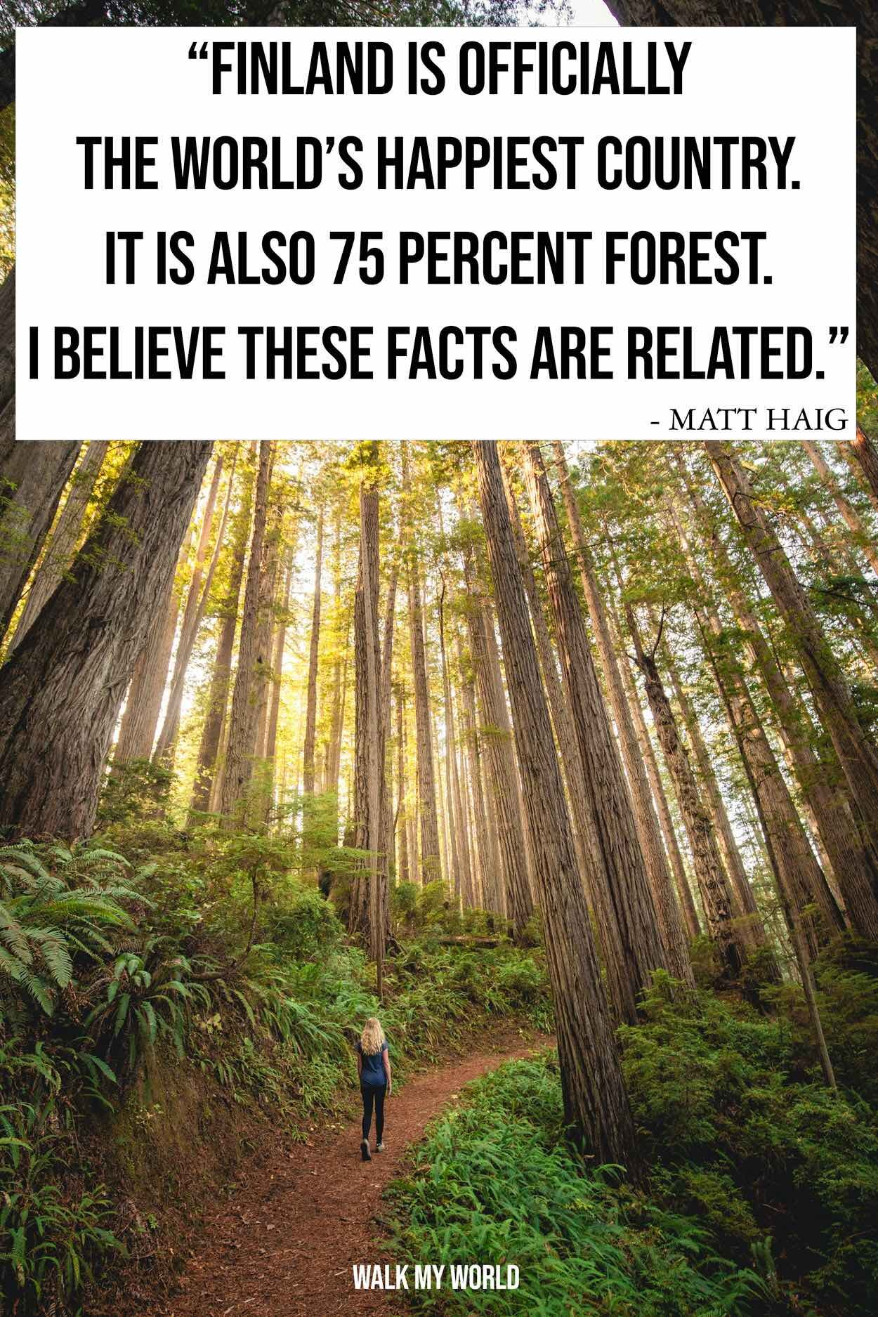100 Forest Quotes That Encapsulate The Beauty Of The Woods Walk My World