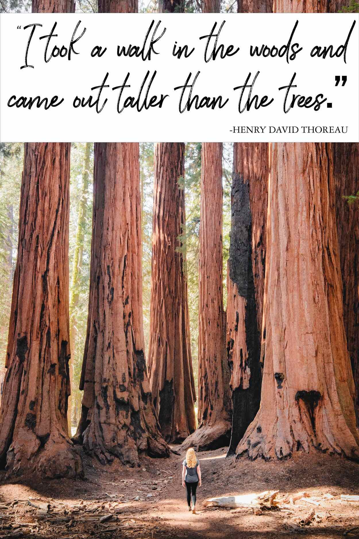20 Forest Quotes that encapsulate the beauty of the woods — Walk ...