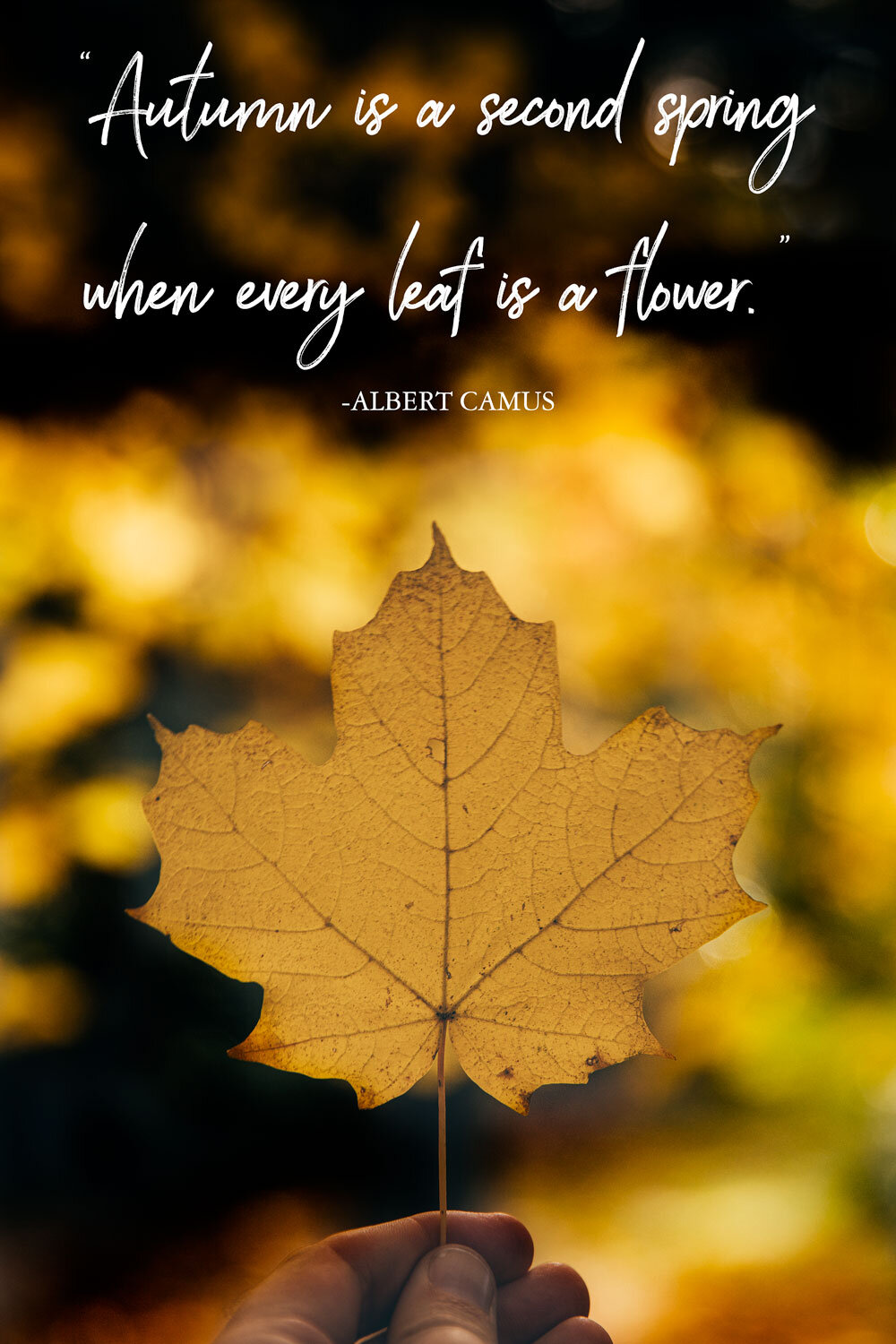 40 Inspirational Leaf Quotes for nature lovers — Walk My World