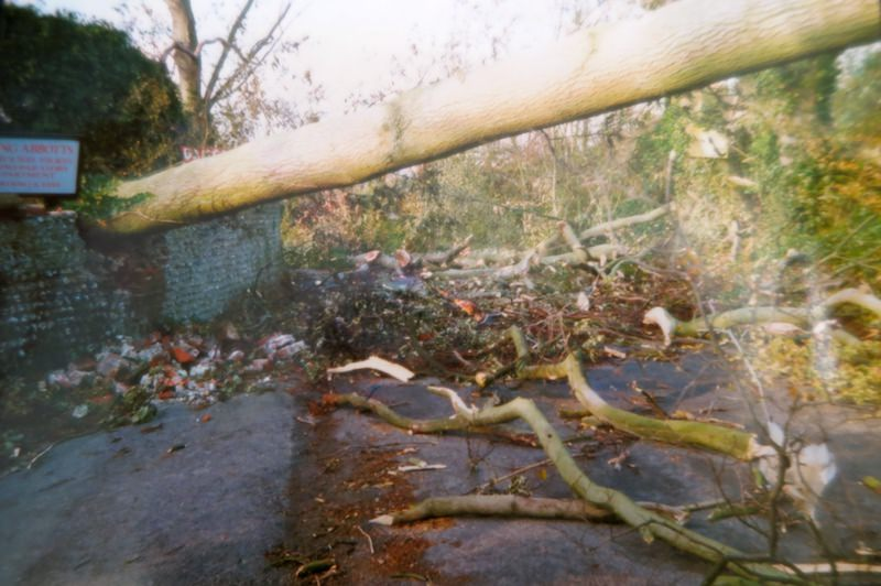 One of many fallen trees on Church Lane blocking access into Sompting Abbotts Preparatory School