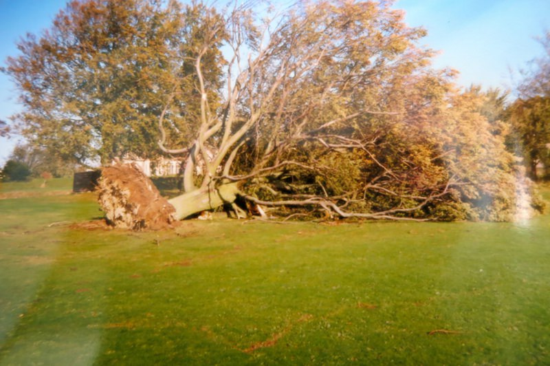 A mature tree uprooted in the school grounds