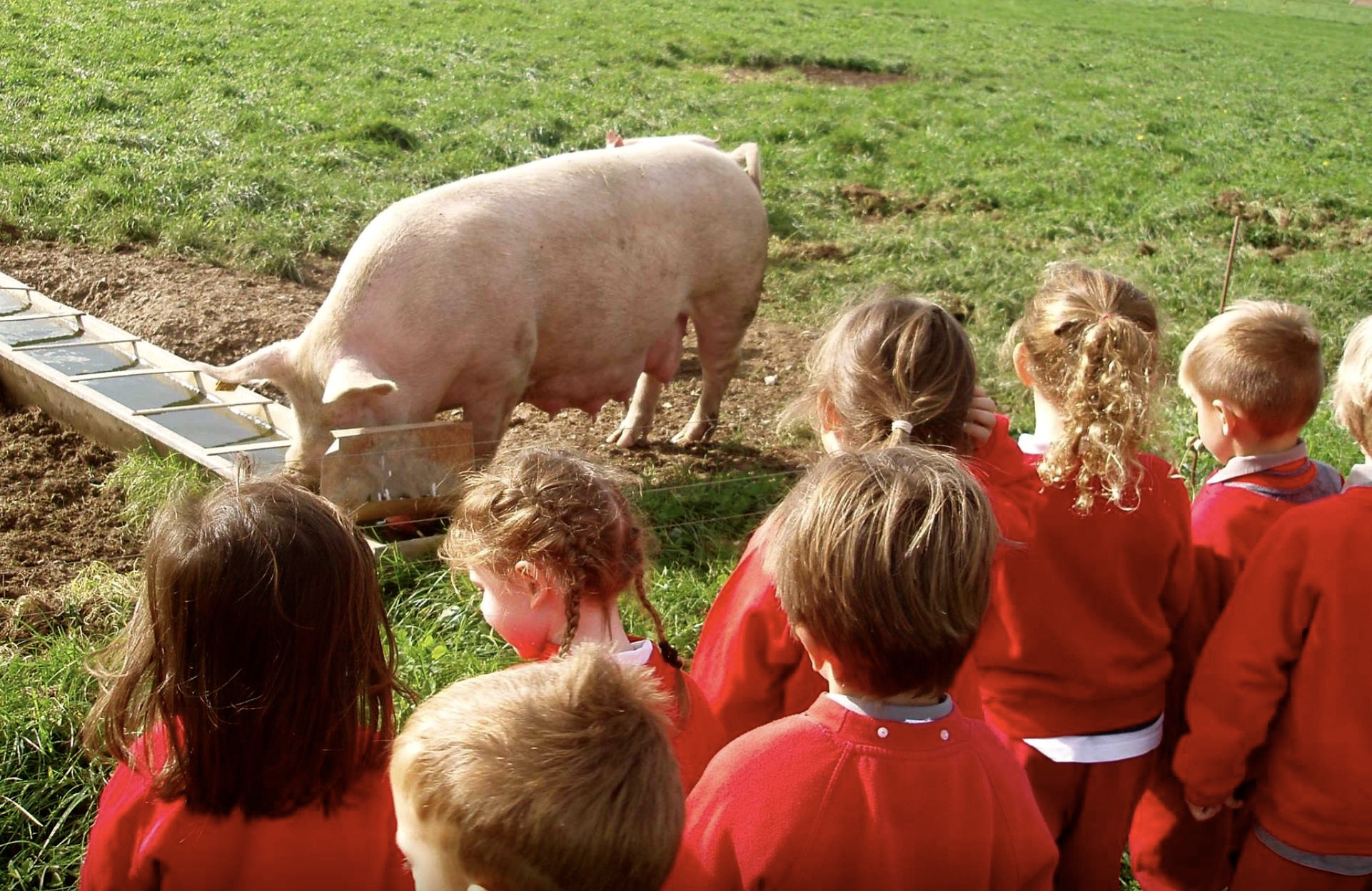 visit to goodwood farm by school children from private school near worthing sompting abbotts prep school