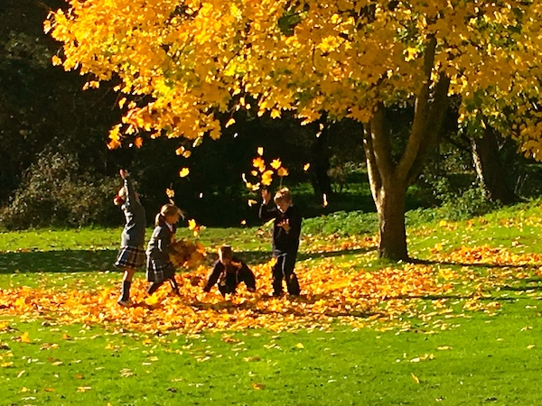 Children having fun with Autumn leaves in the school grounds