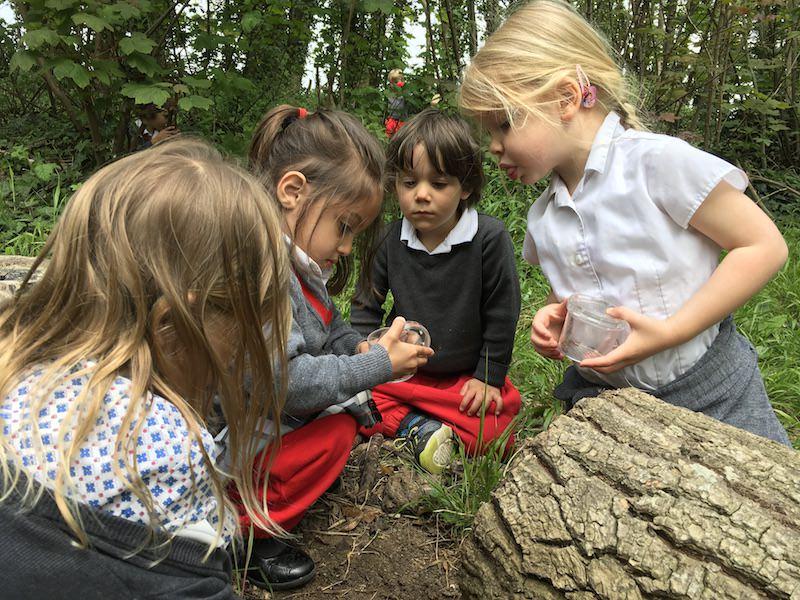 children in woods bug hunting.JPG