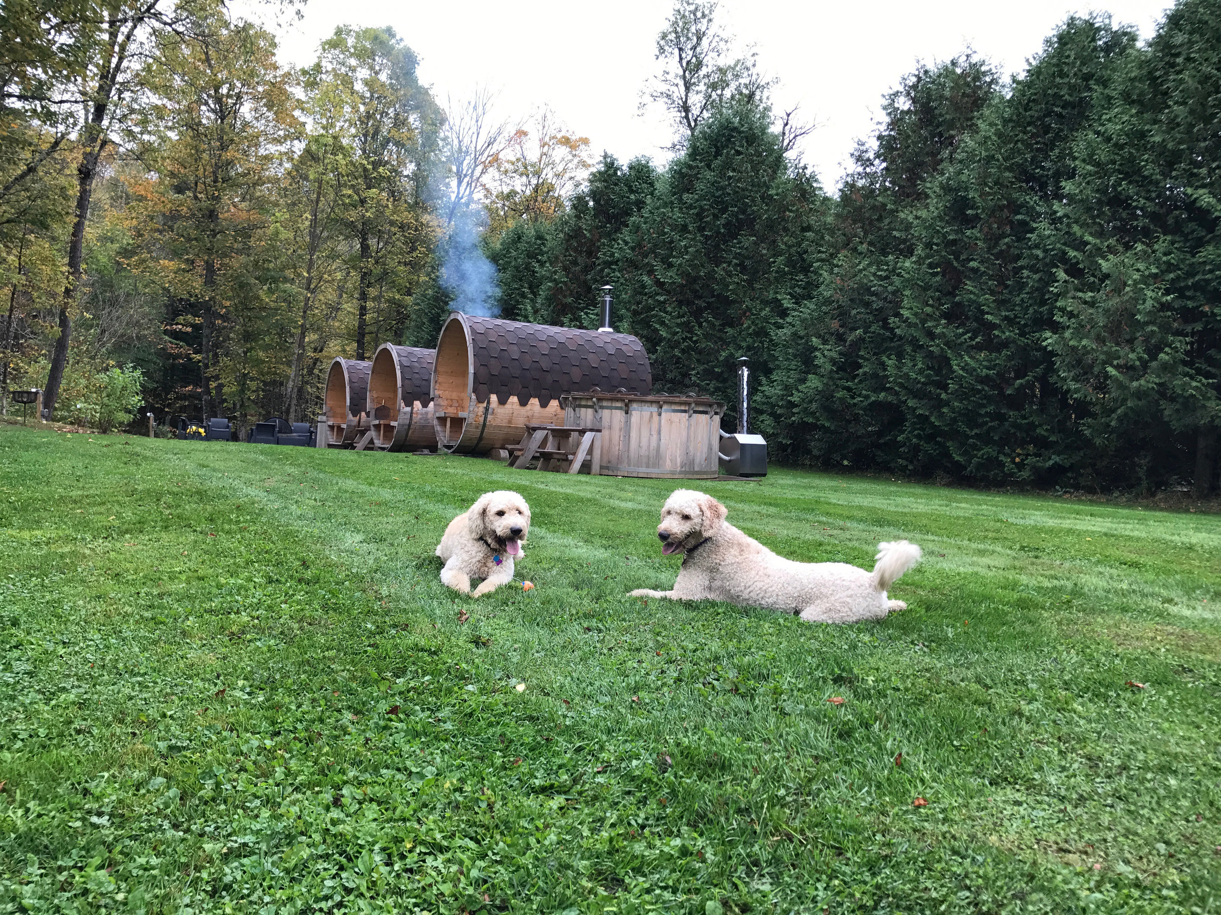 Pet Friendly   Fido and Fifi are welcome in the first floor of the lodge at WilloBurke; please ask for a pet friendly room when making your reservation. Dogs are not allowed on KT on weekends. +30 per dog