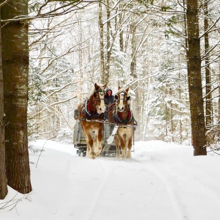 VT_Winter_Sleigh_Rides.jpeg