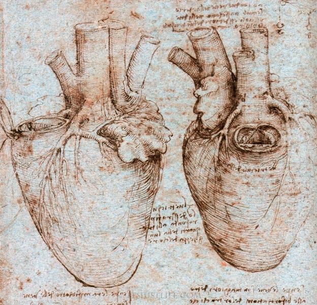 Il Cuore in un disegno di Leonardo da Vinci