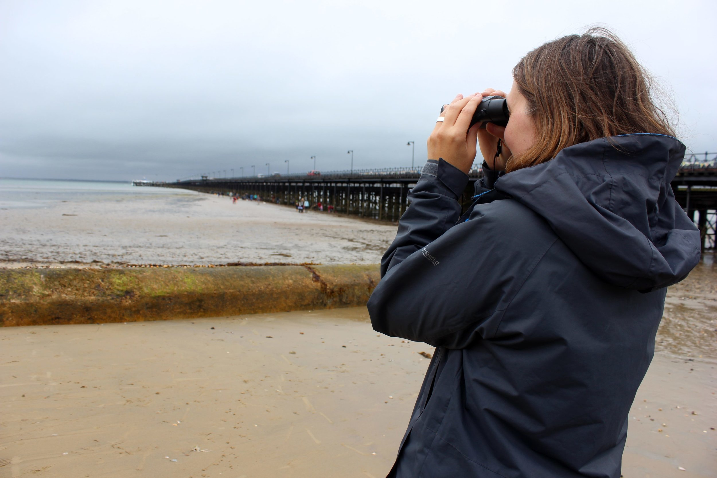 Scanning for bird species... over and around the pier...