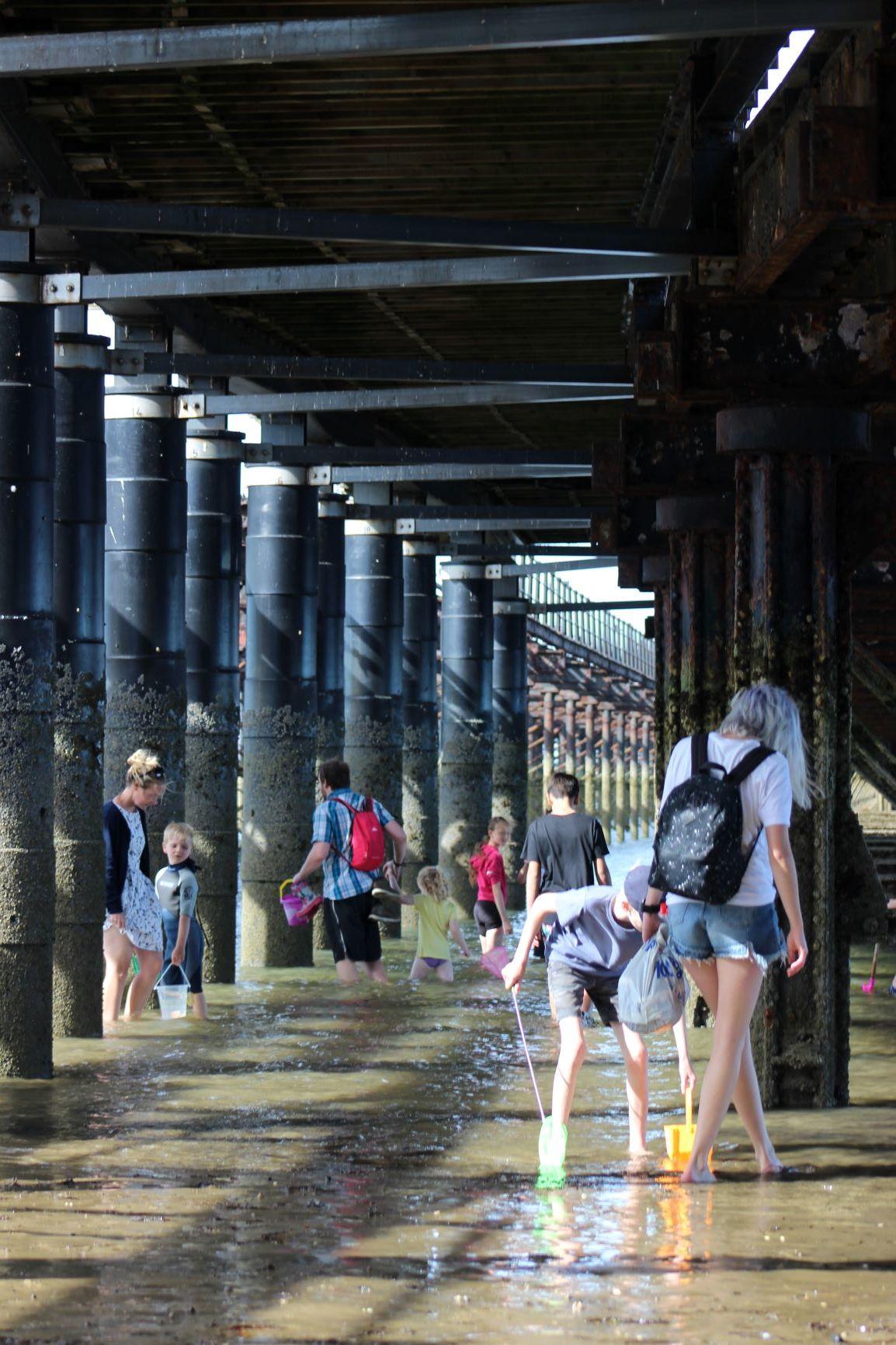 Under the Pier in a Biosphere