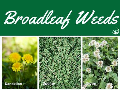 Broad Leaf Weeds.png