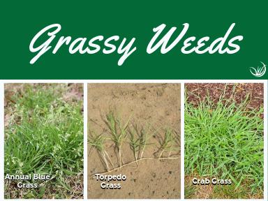 Grassy Weeds.png