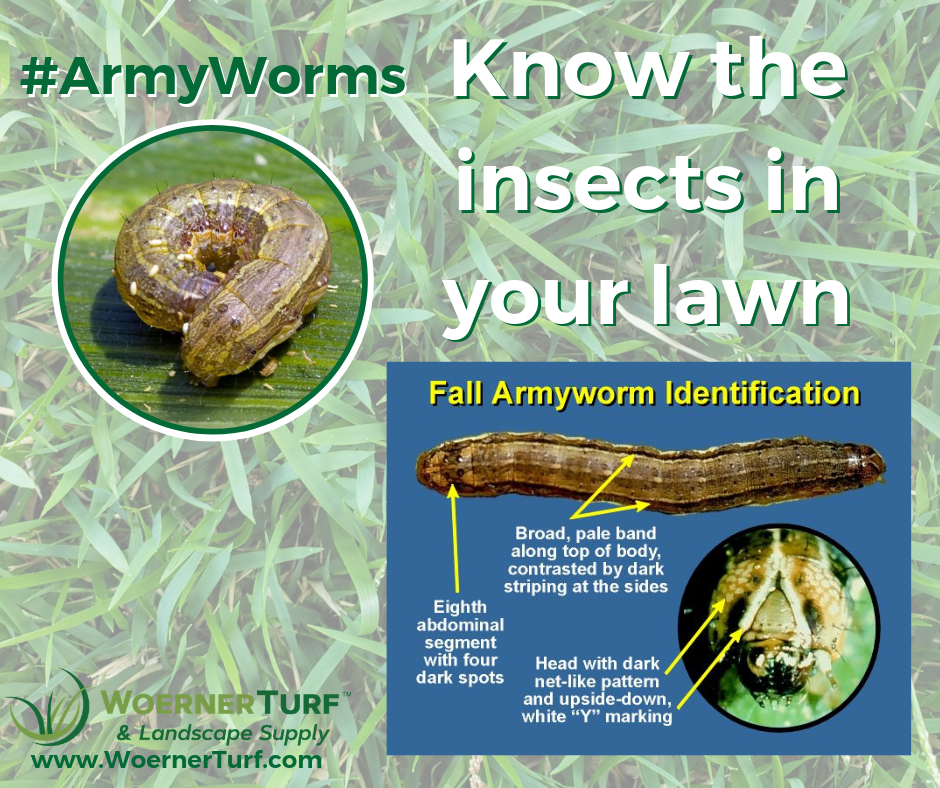 #Army Worms.png