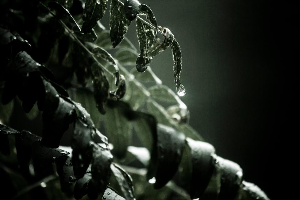 Environment/Nature -