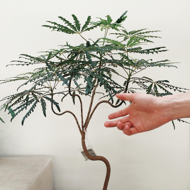 Plant hand