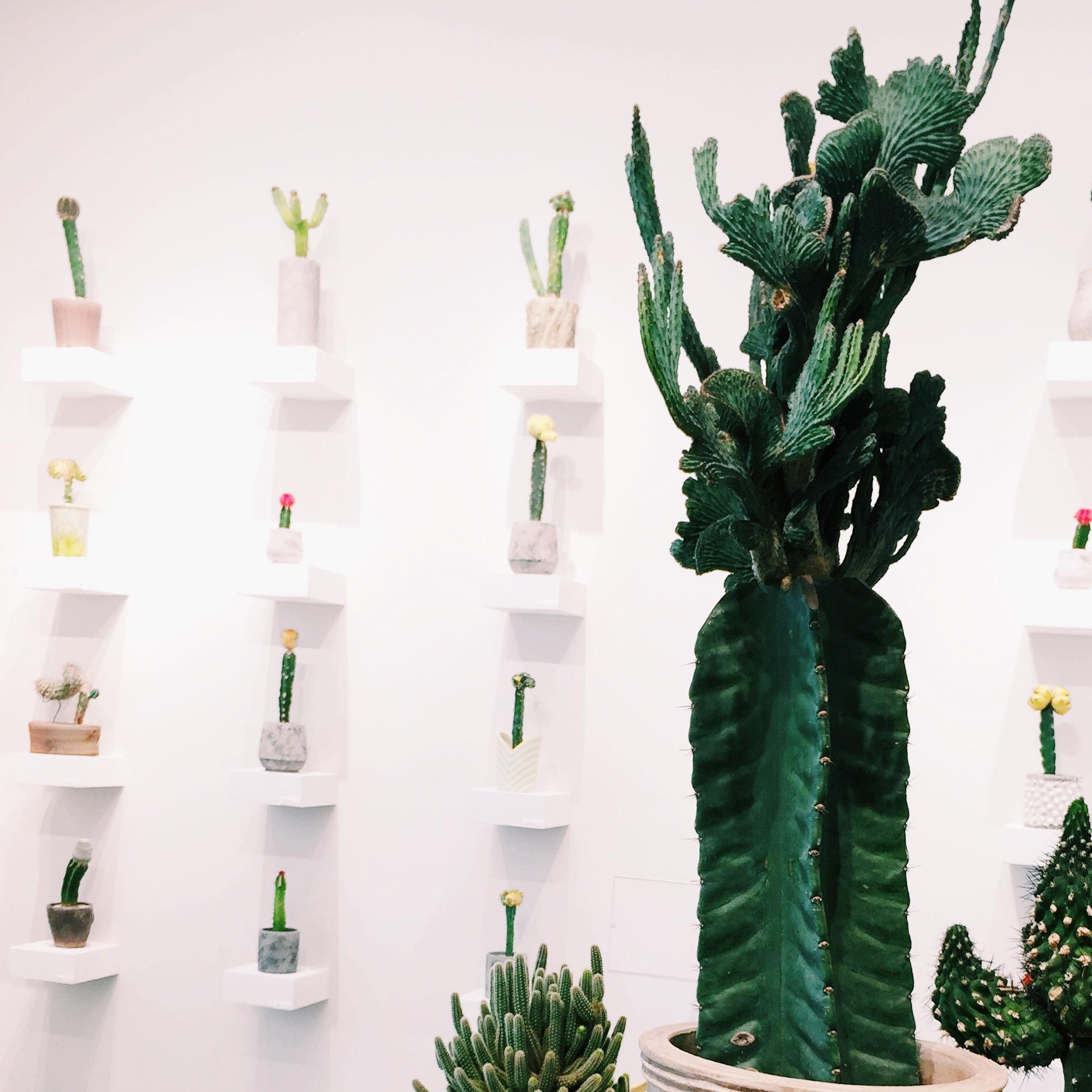 Cactus grid