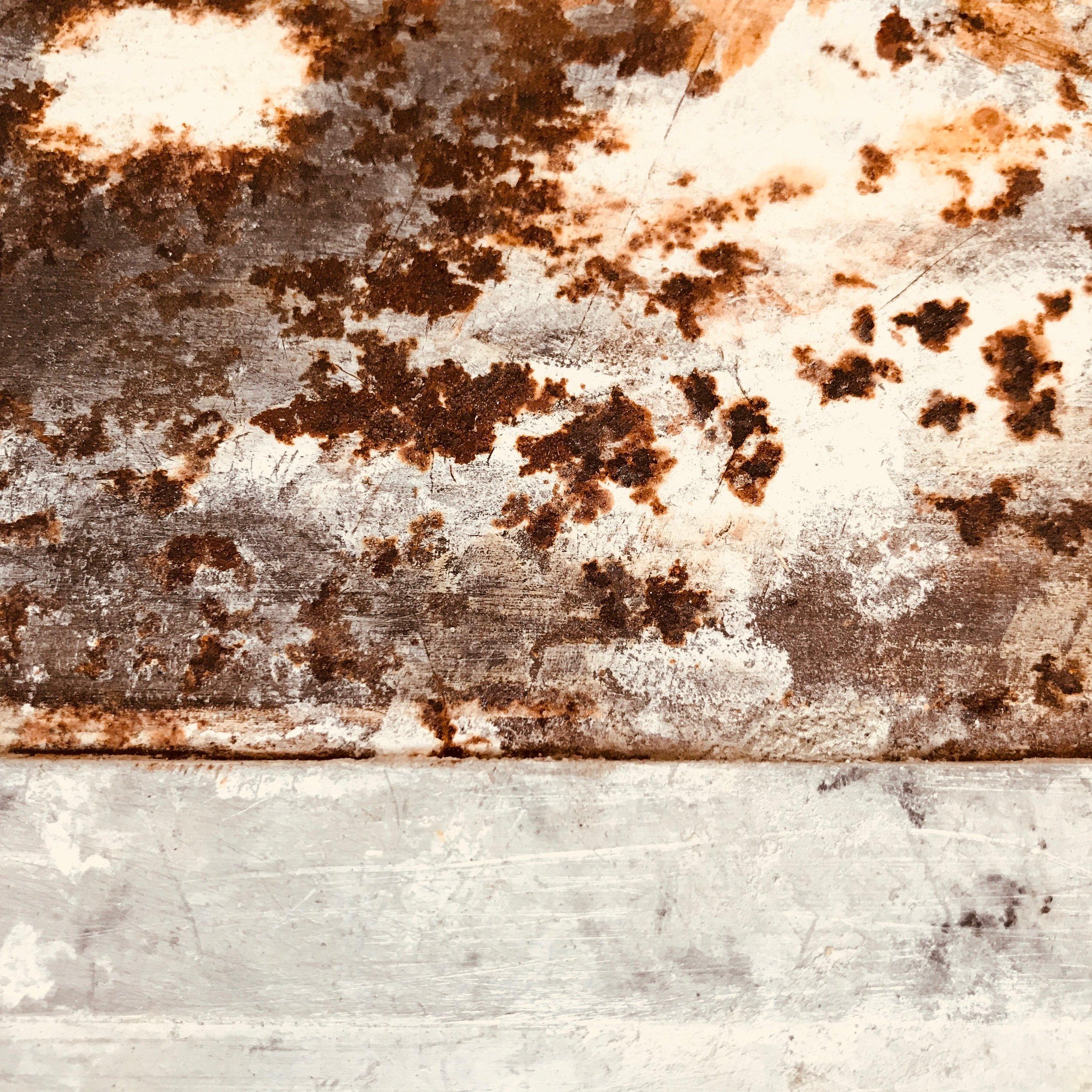 #7 lichen