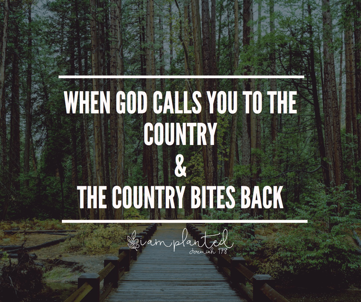 When God Calls You To The Country & The Country Bites Back.jpeg