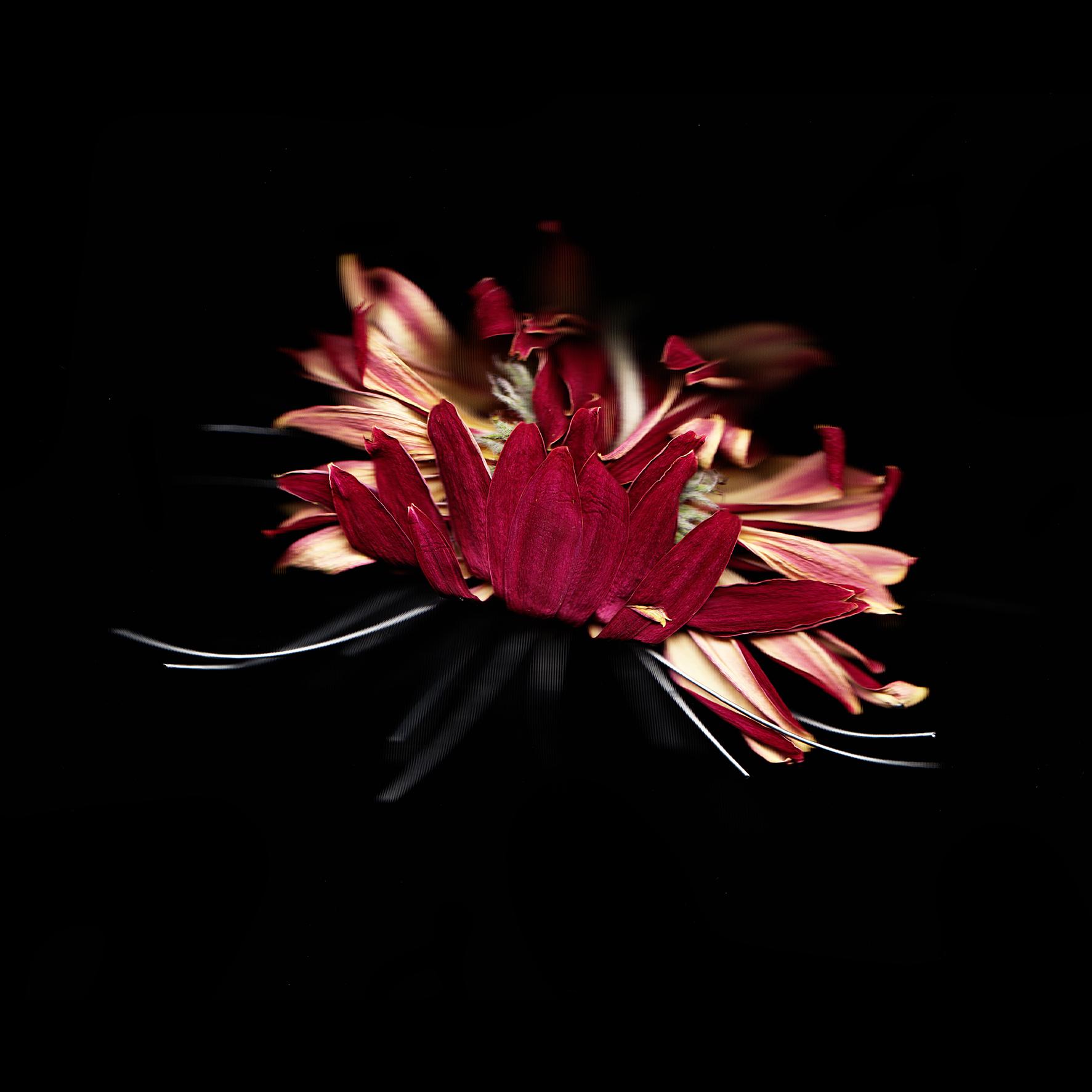 digital organism_flower.jpg