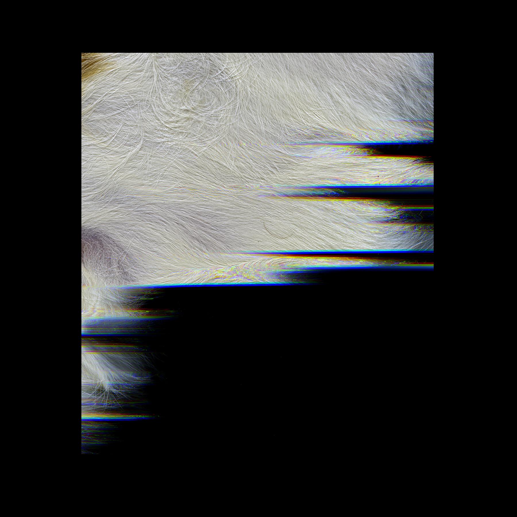 oscar 2.jpg