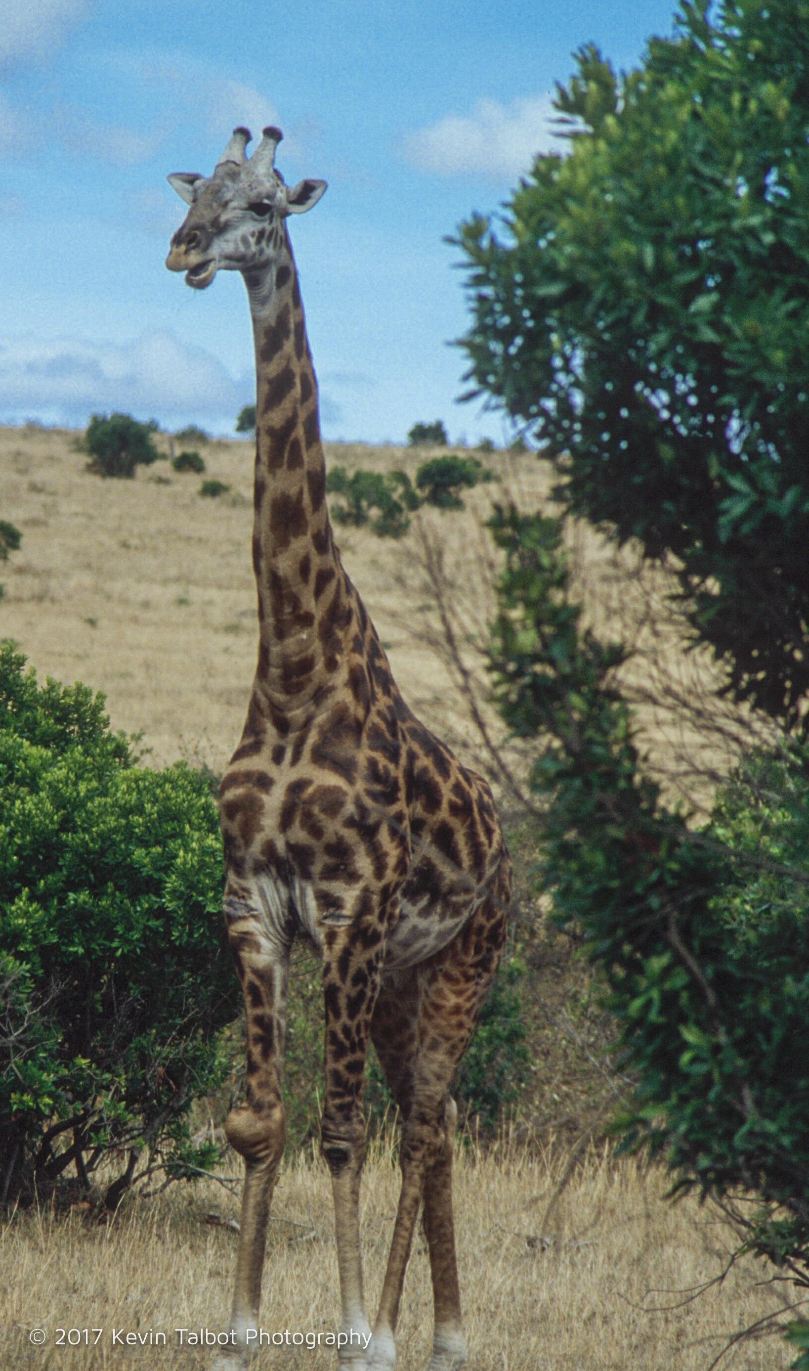 Africa Animals-02.jpg