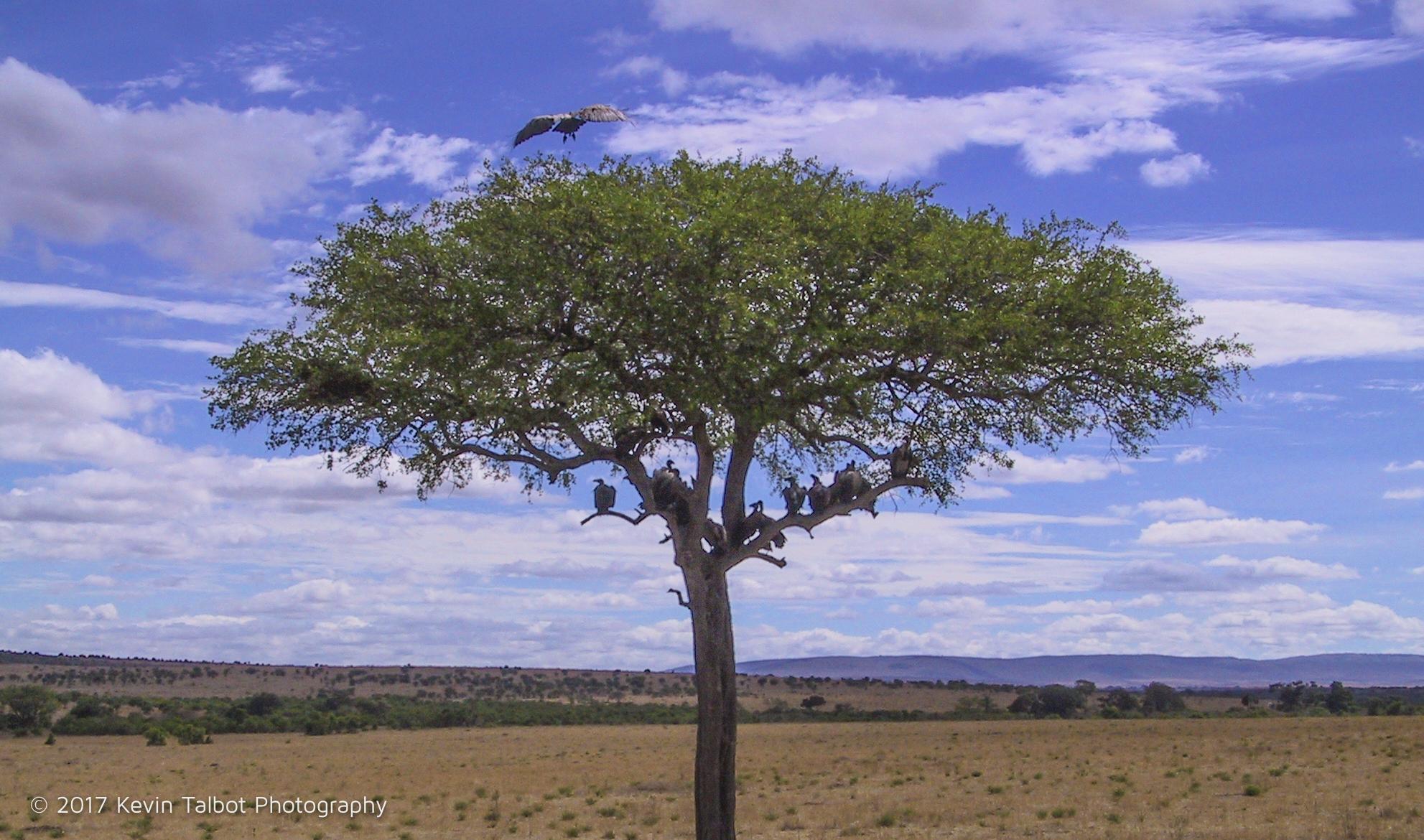 Africa Animals-03.jpg
