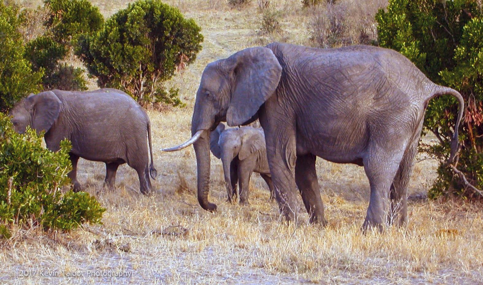 Africa Animals-08.jpg