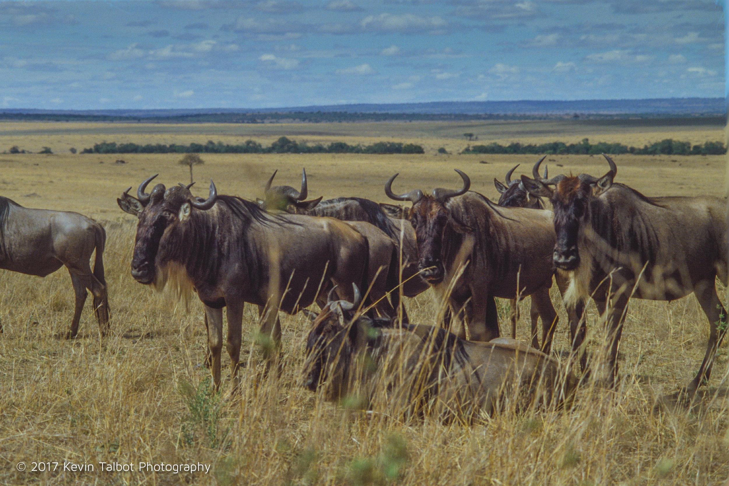 Africa Animals-10.jpg