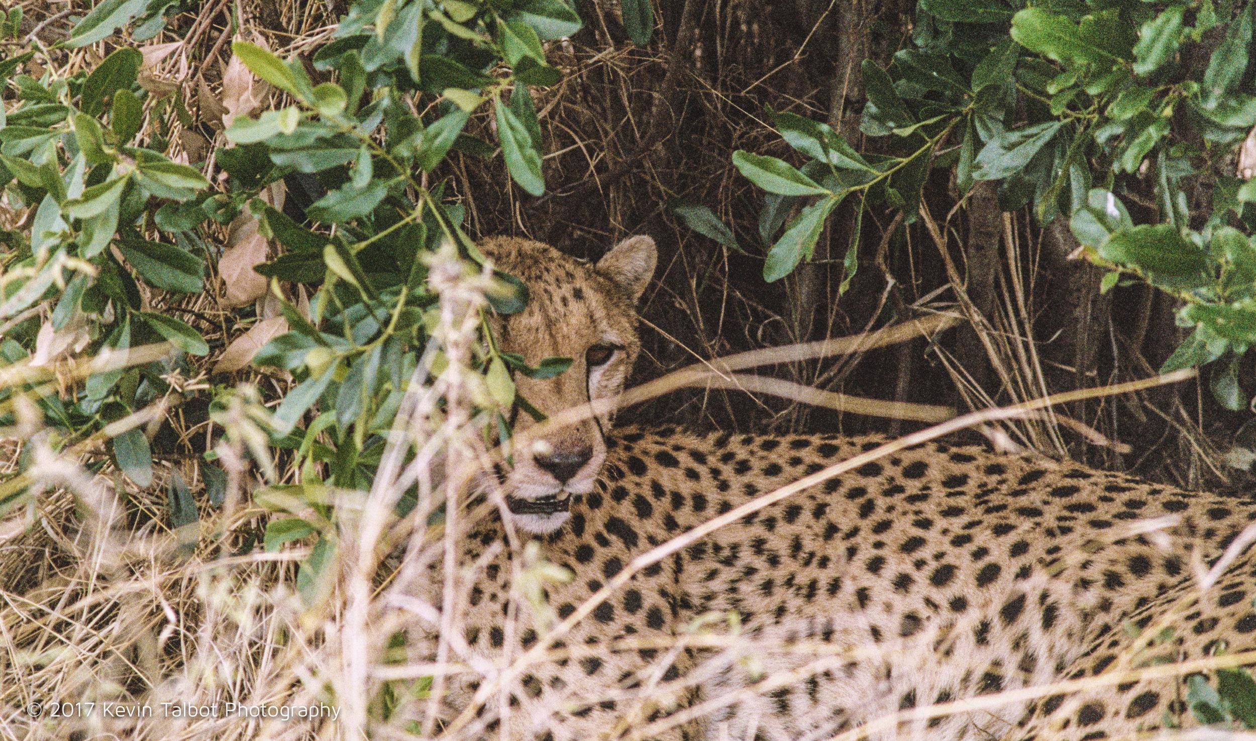 Africa Animals-14.jpg