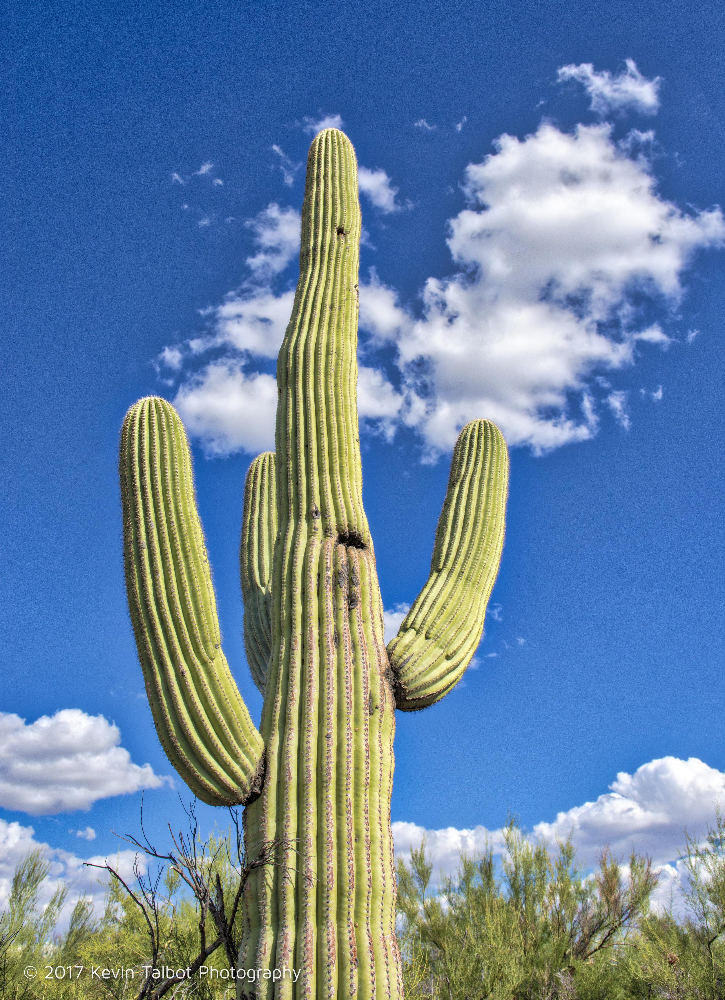 Tucson-05.jpg