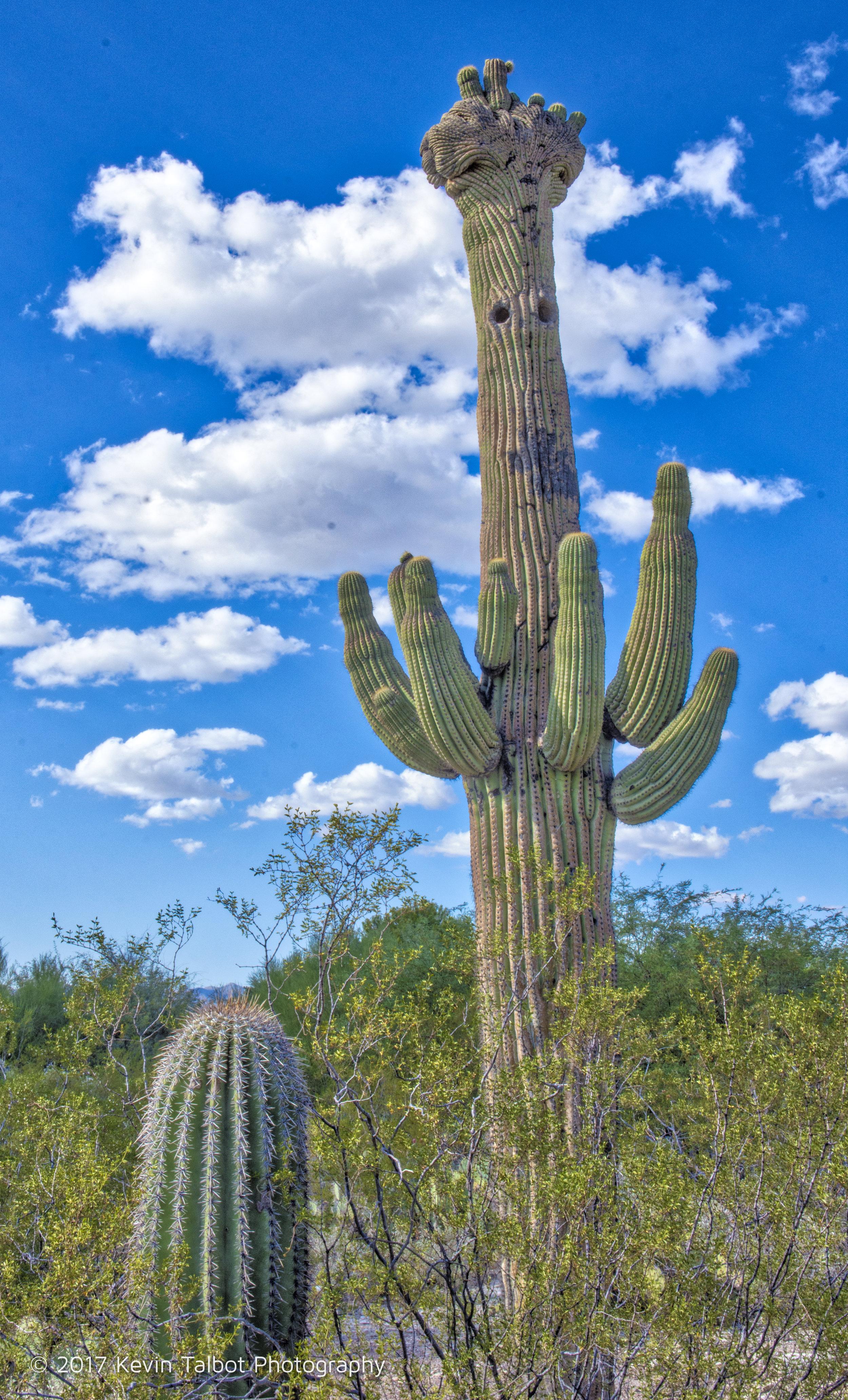 Tucson-09.jpg