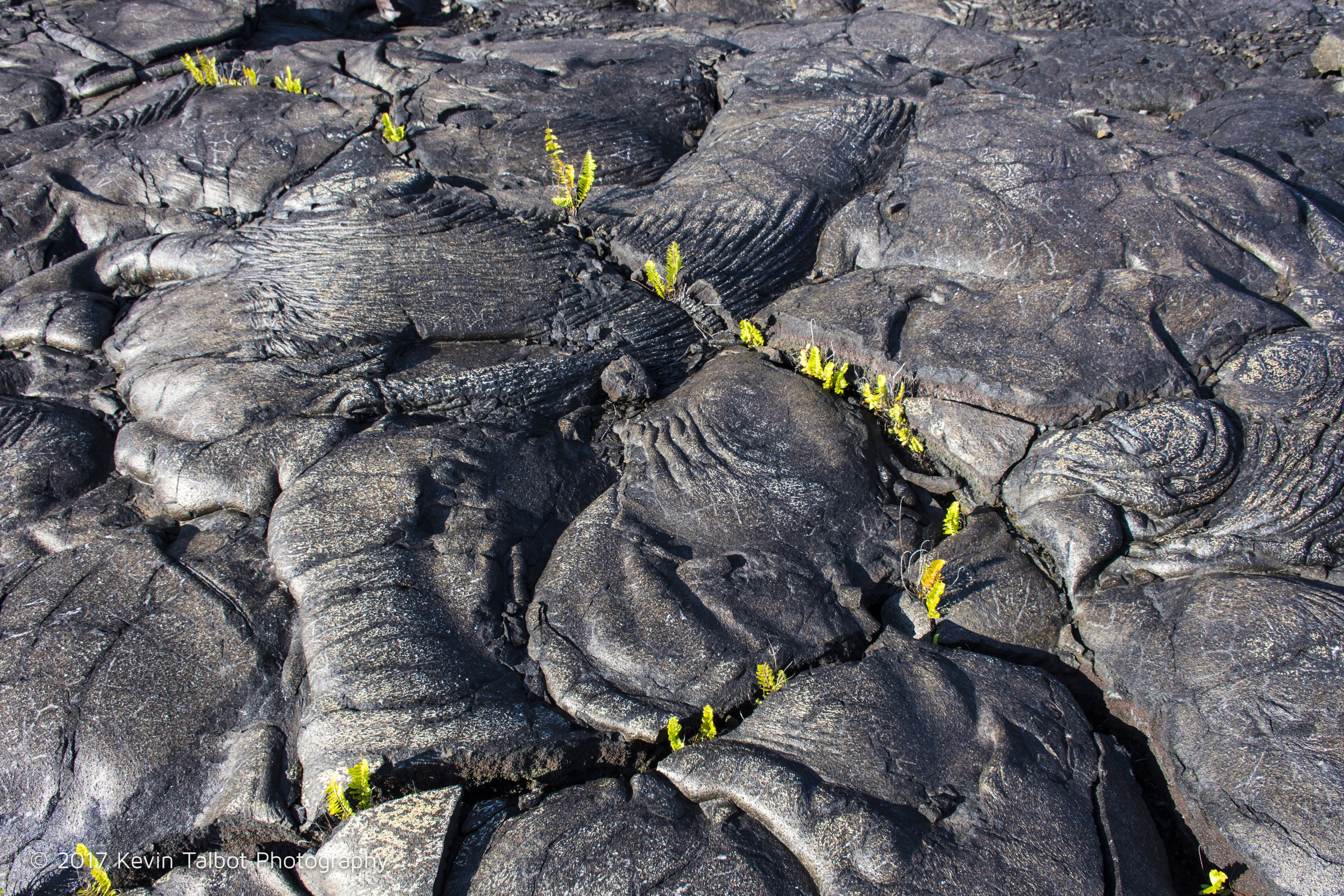 lava fields-10.jpg