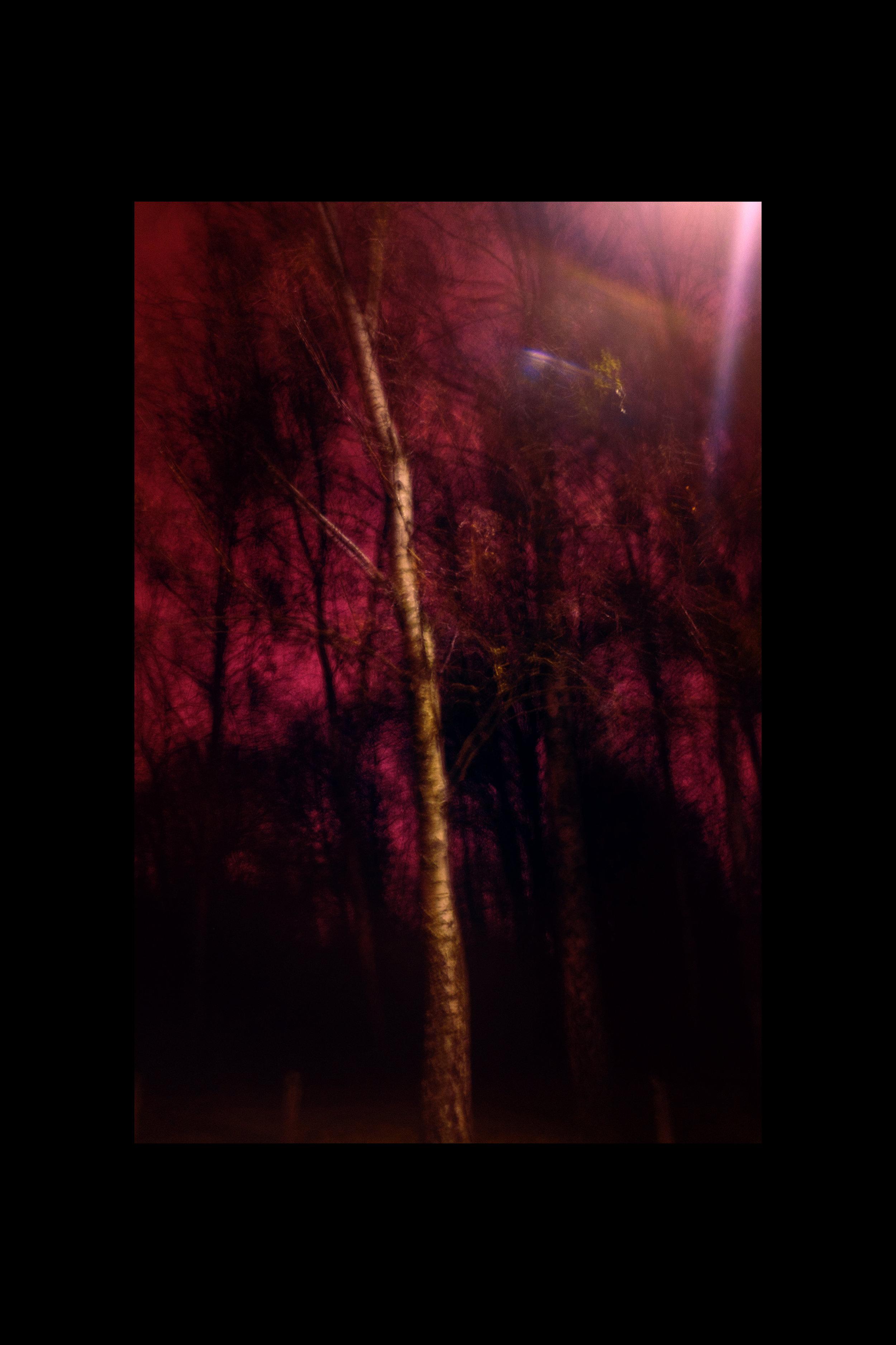 Baum_rot_2_web.jpg