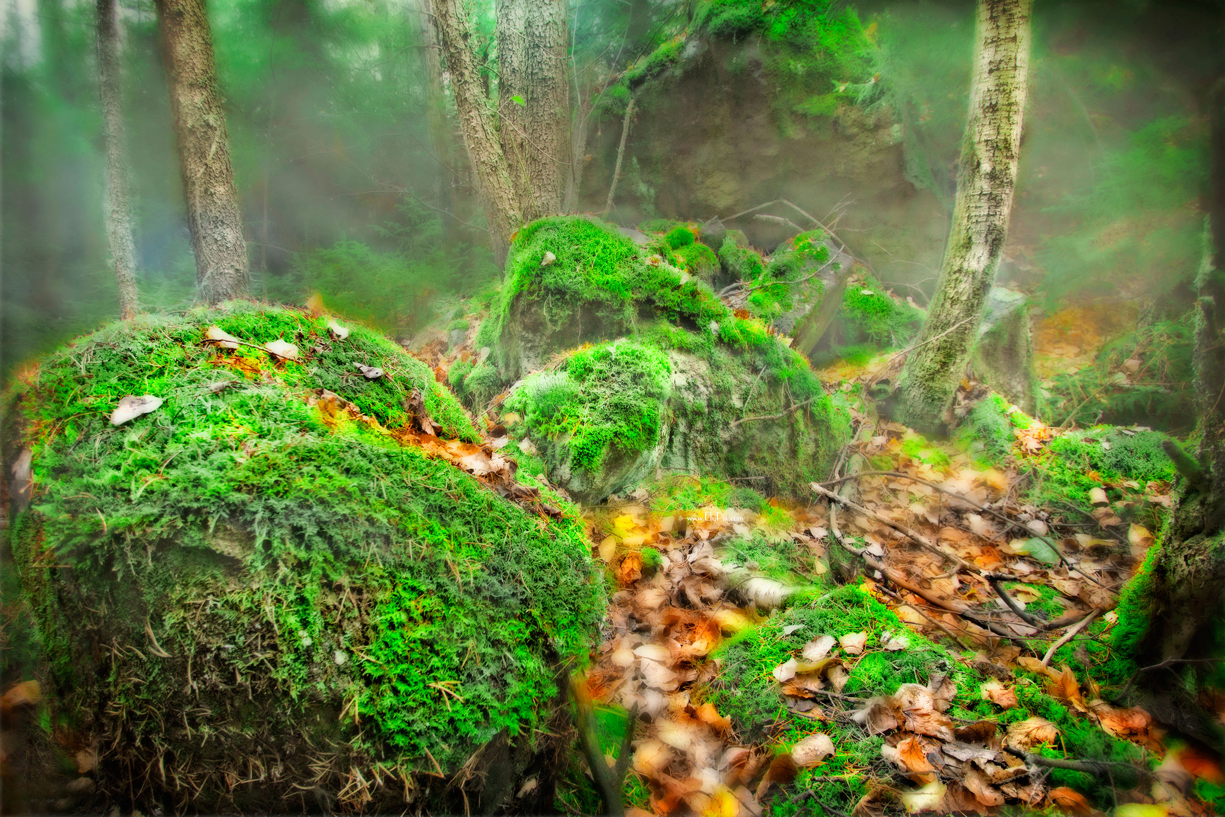 Green Moss in the Woods of the Boundary Waters Canoe Area Wilderness, by Roy Misonznick