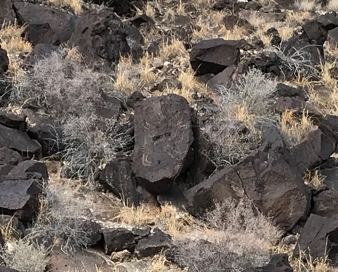 """Rinconada Canyon hiking sign: """"a large petroglyph of a quadruped, possibly a deer… Some Pueblo elders believe that the petroglyphs choose when and to whom to reveal themselves."""""""