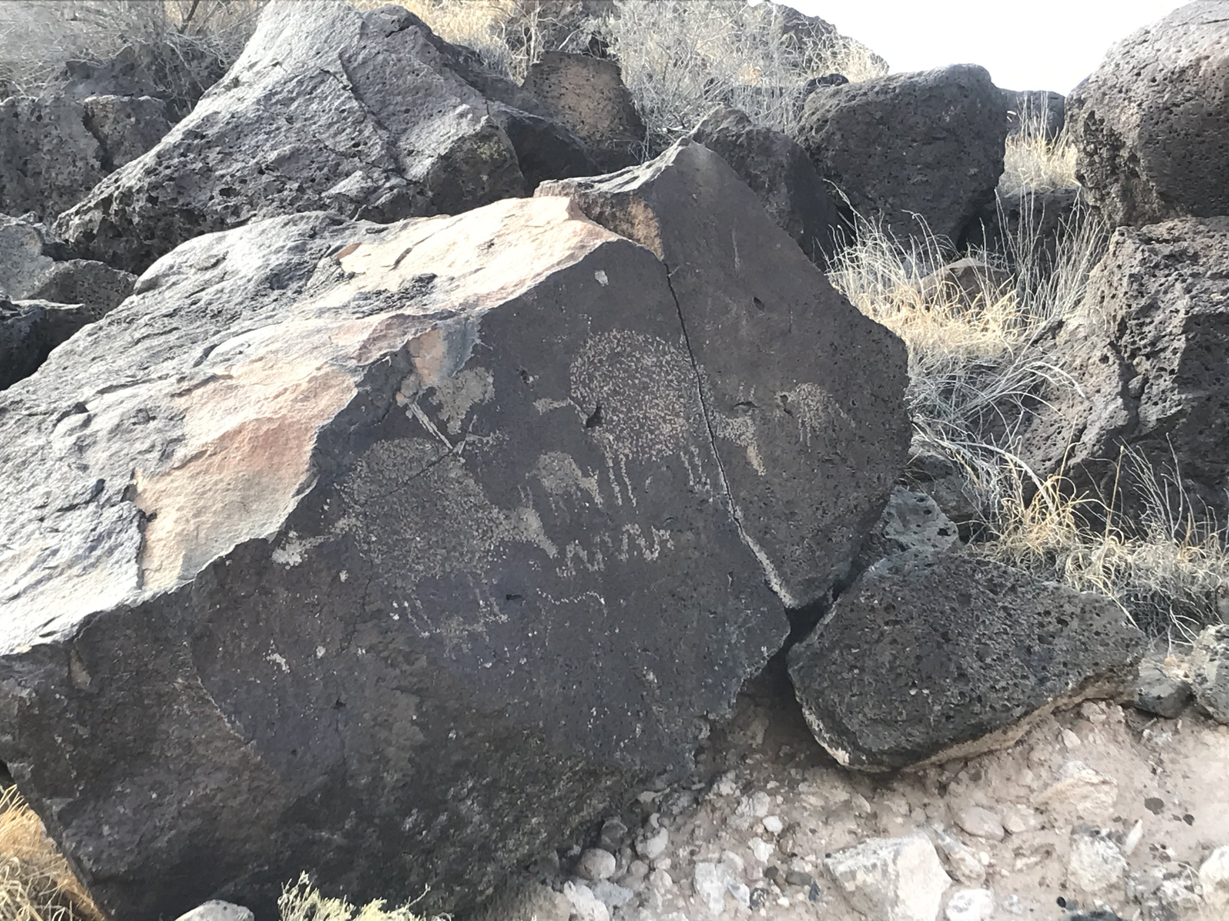 """Rinconada Canyon hiking sign: """"Grazing sheep are portrayed in this petroglyph. We know for certain that sheep, a non-native species, were brought by the Spanish settlers in the 1600s. With this information we can safely say that this petroglyph was made after A.D. 1600."""""""