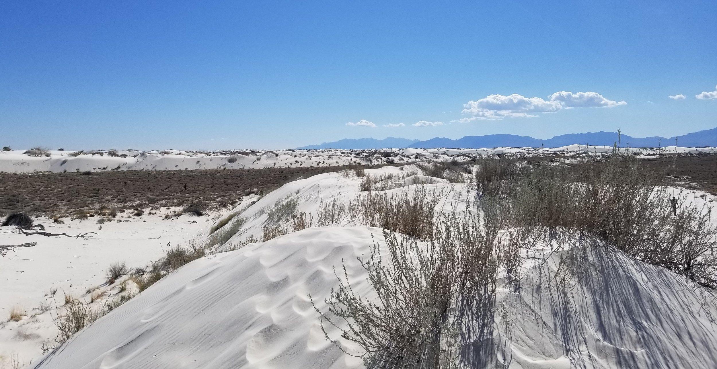 Dune Life Nature Trail