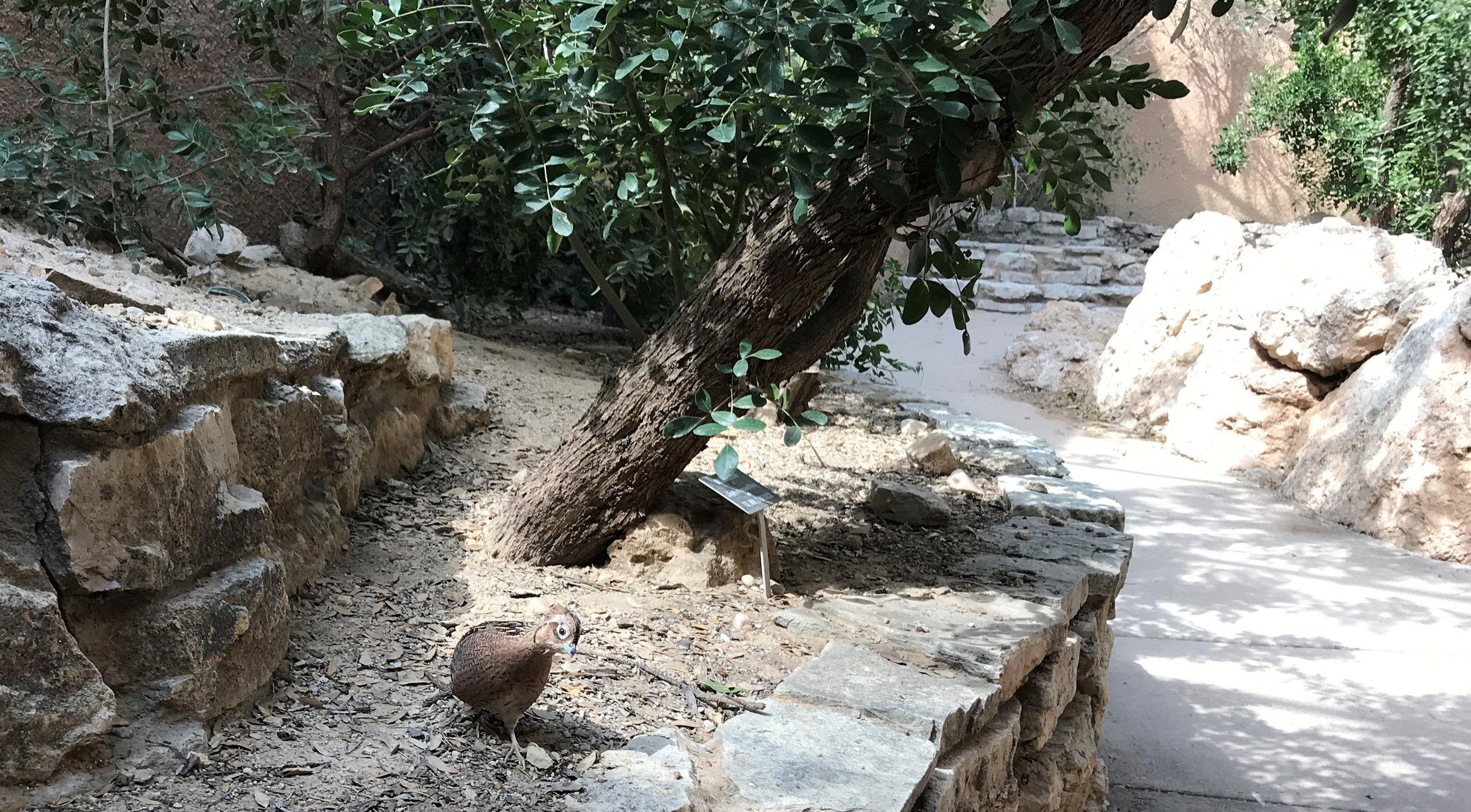 Cute little bird at the Carlsbad Living Desert Zoo