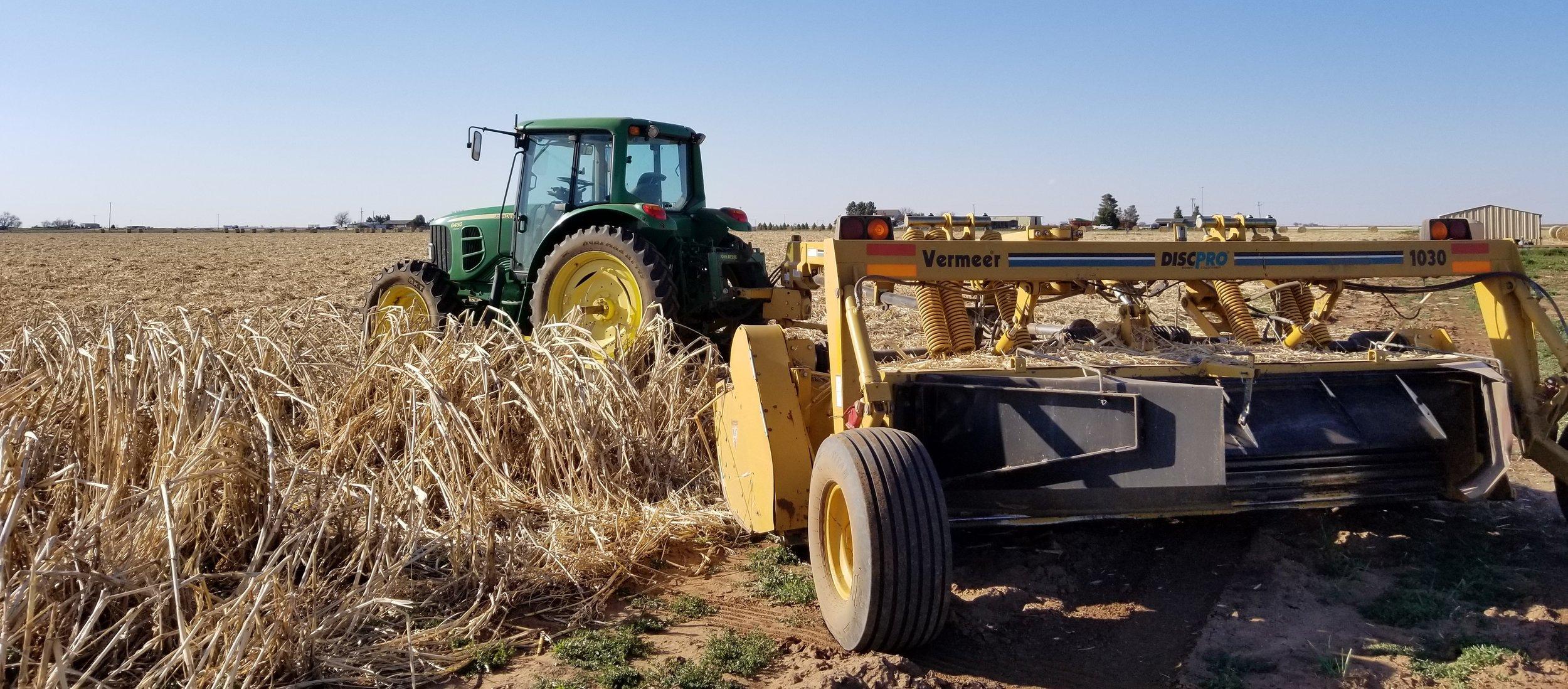 Cutting hay.