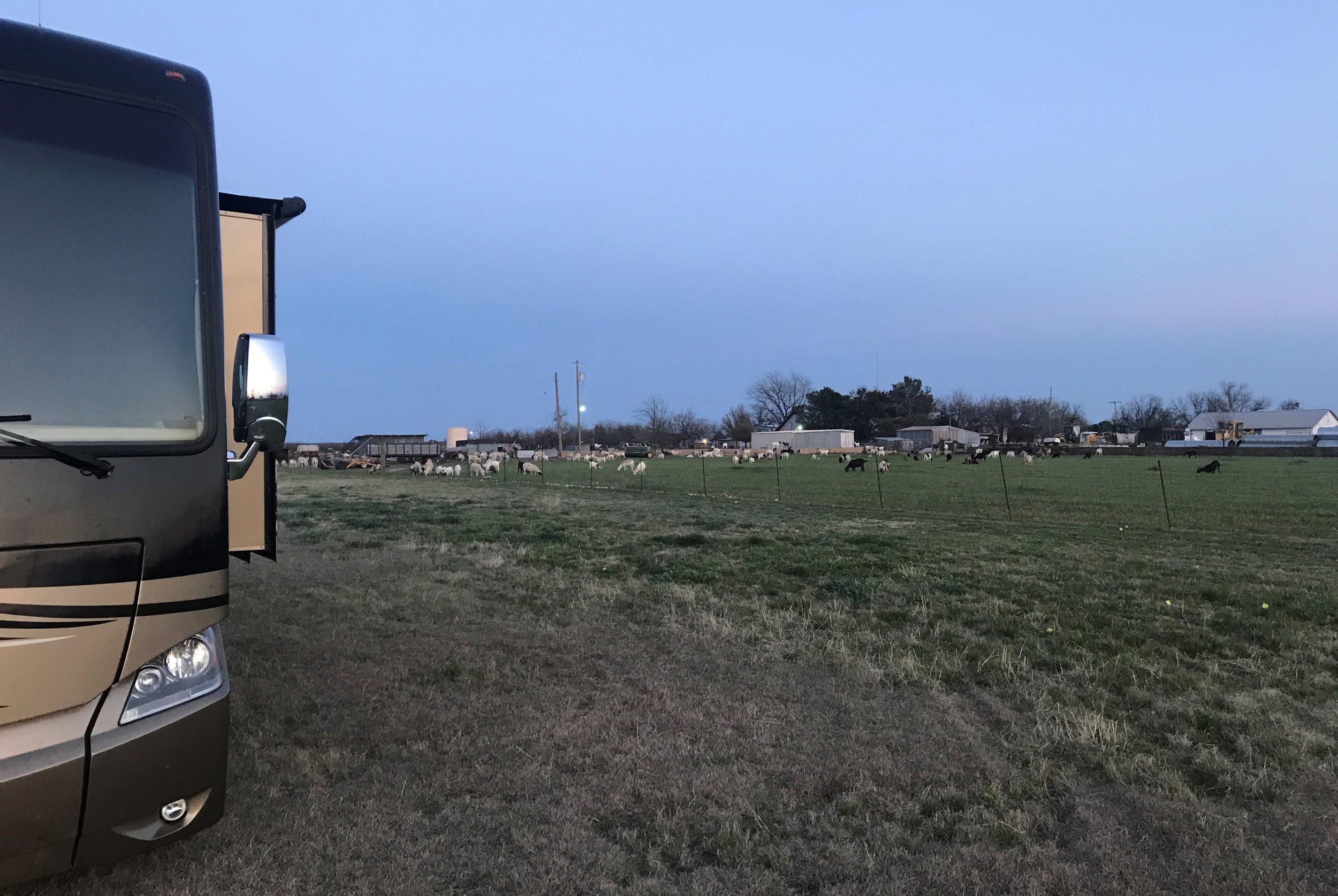 Goats next door.
