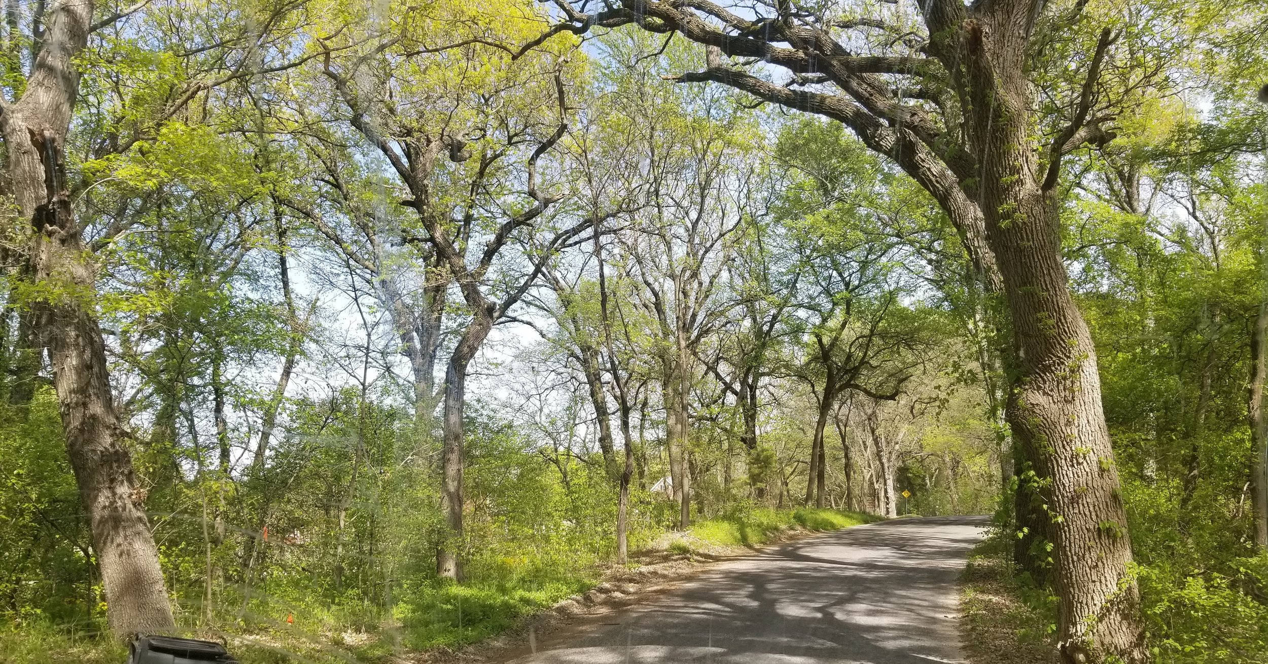 Canopy of trees on the road to my parent's house in Midlothian, TX