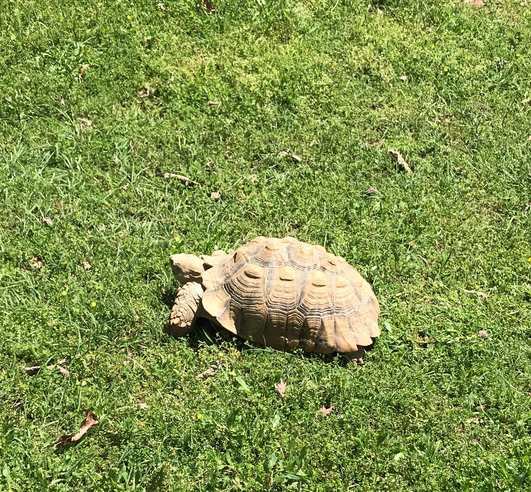 A tortoise!  Not as big as the one our neighbors had in Hillcrest though.