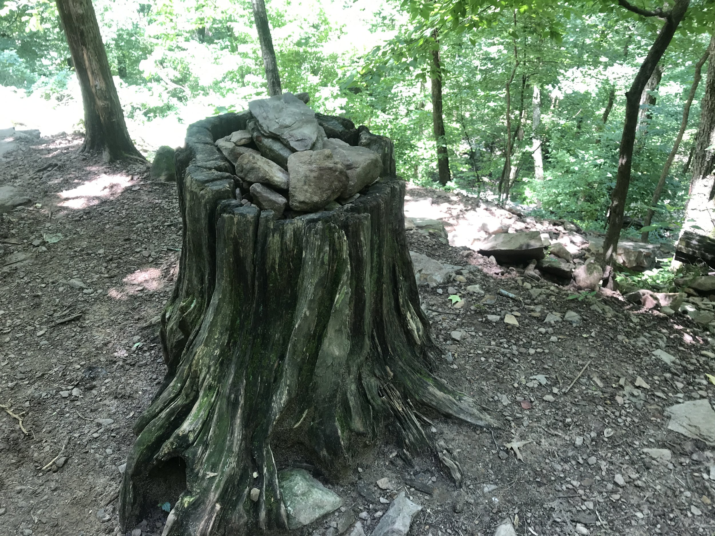That is one way to fill an old stump