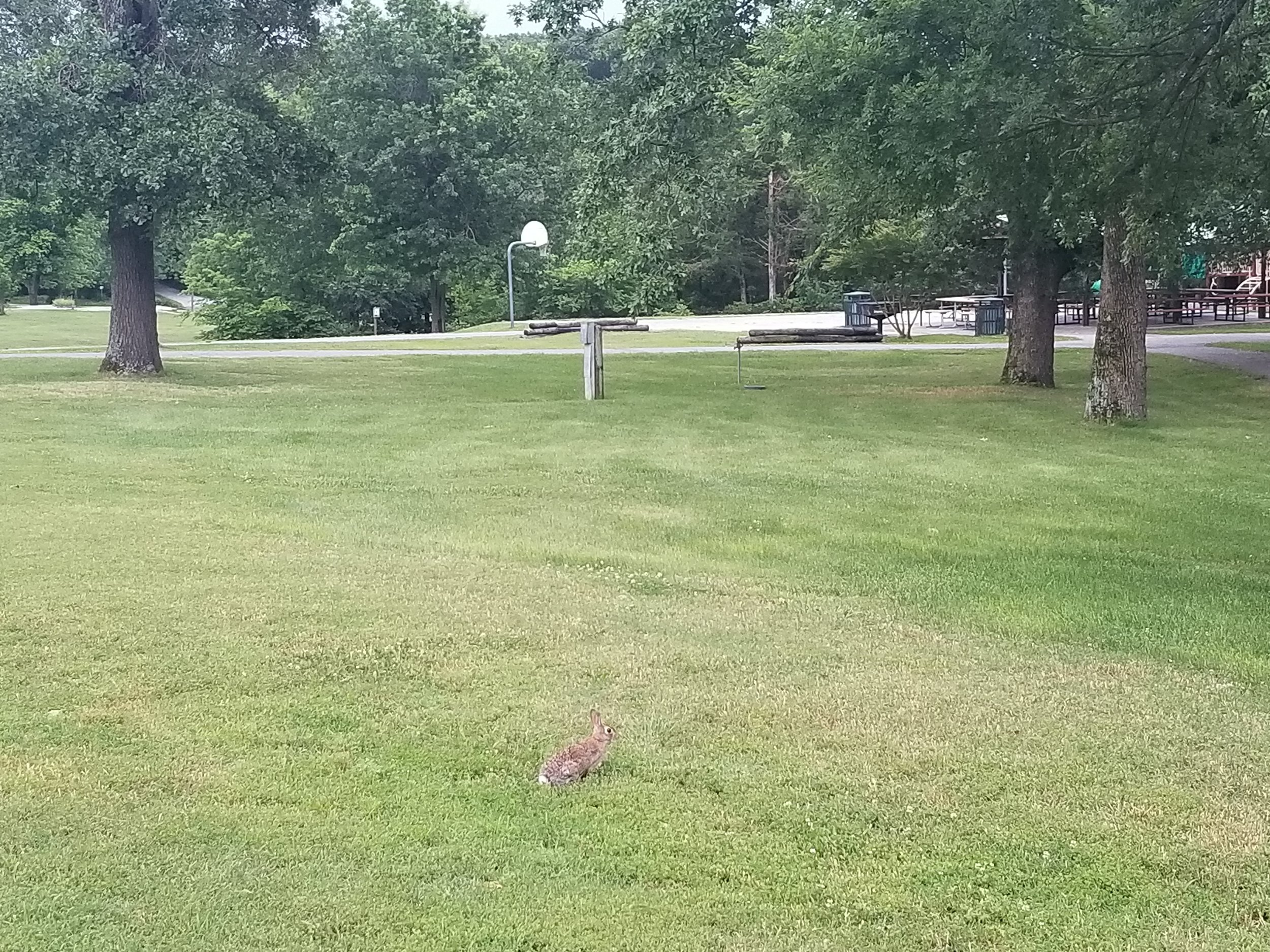 Walking through the park and this rabbit let us get surprisingly close