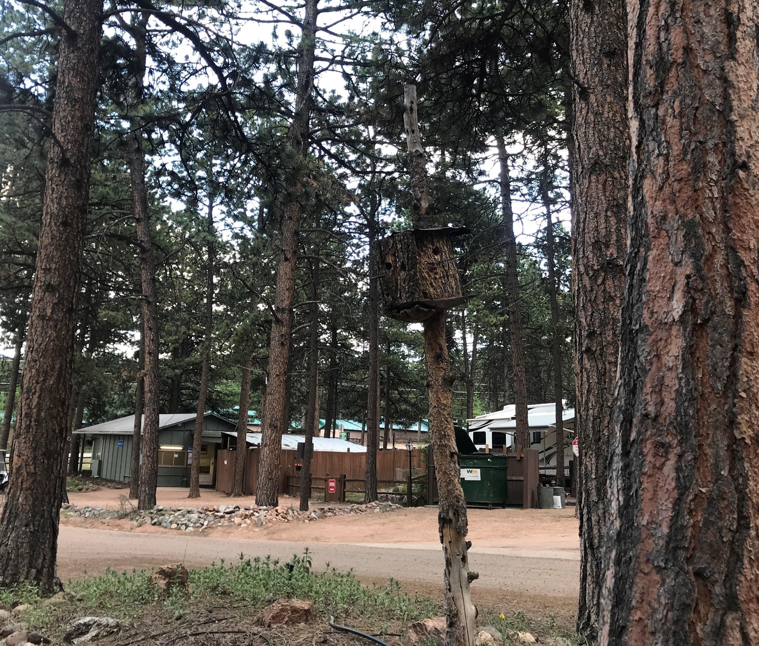 Bird house at the RV park