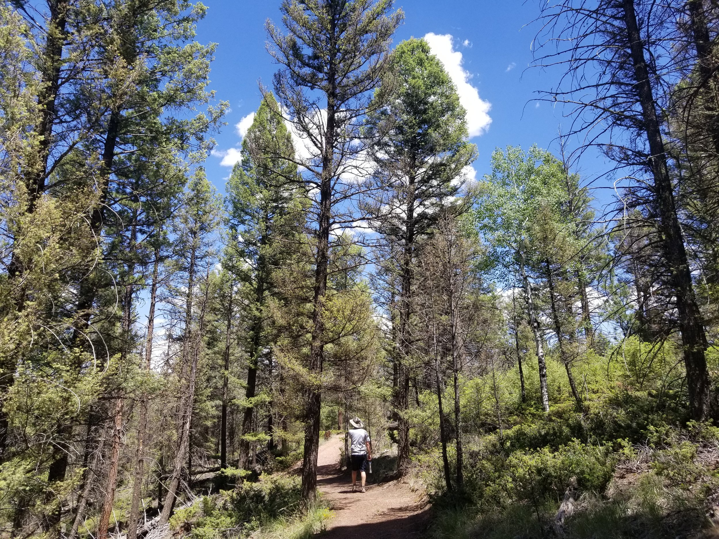 Hiking Florissant Fossil Beds
