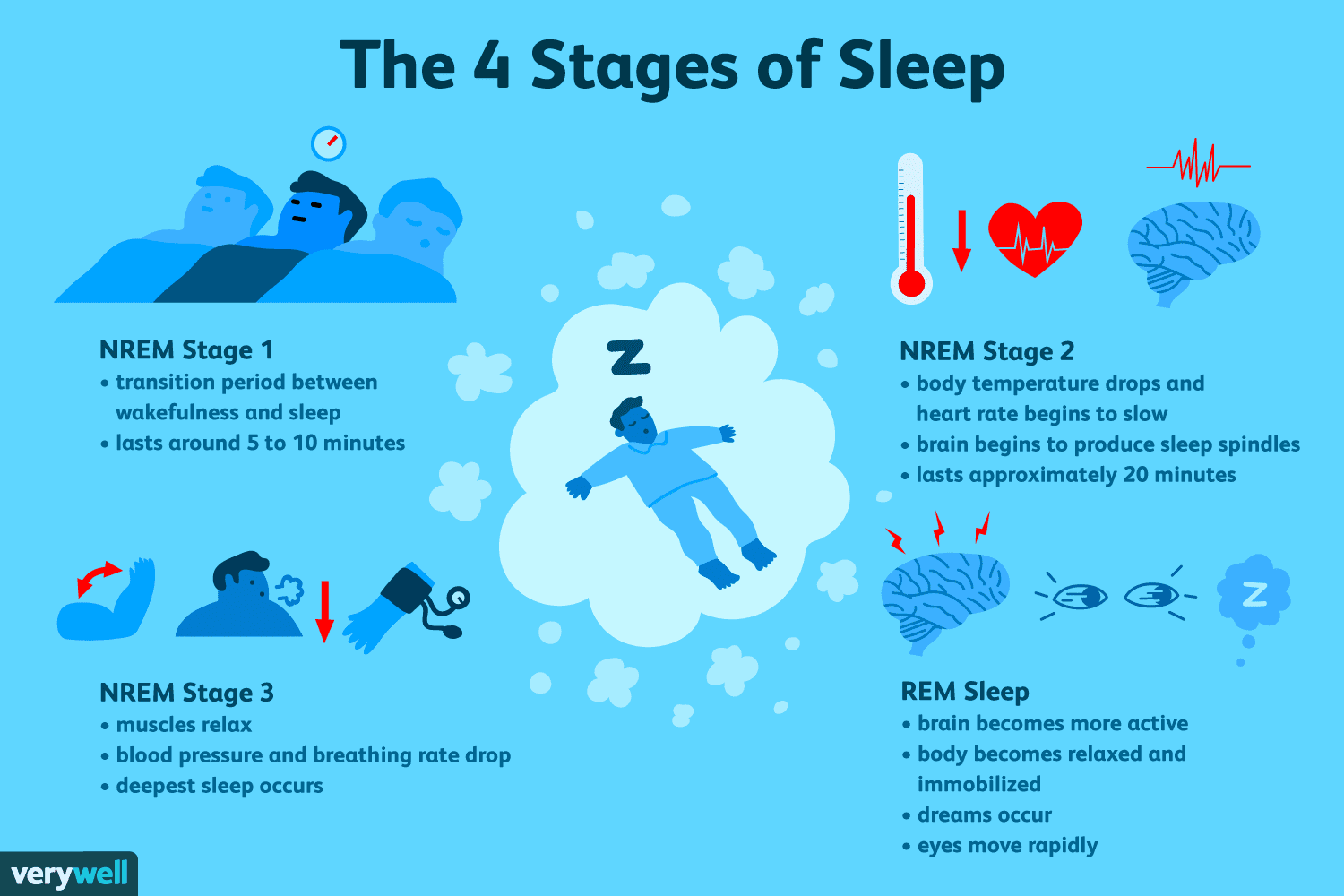 the-four-stages-of-sleep-2795920_FINAL-5c05c2fc46e0fb00018dac3d.png