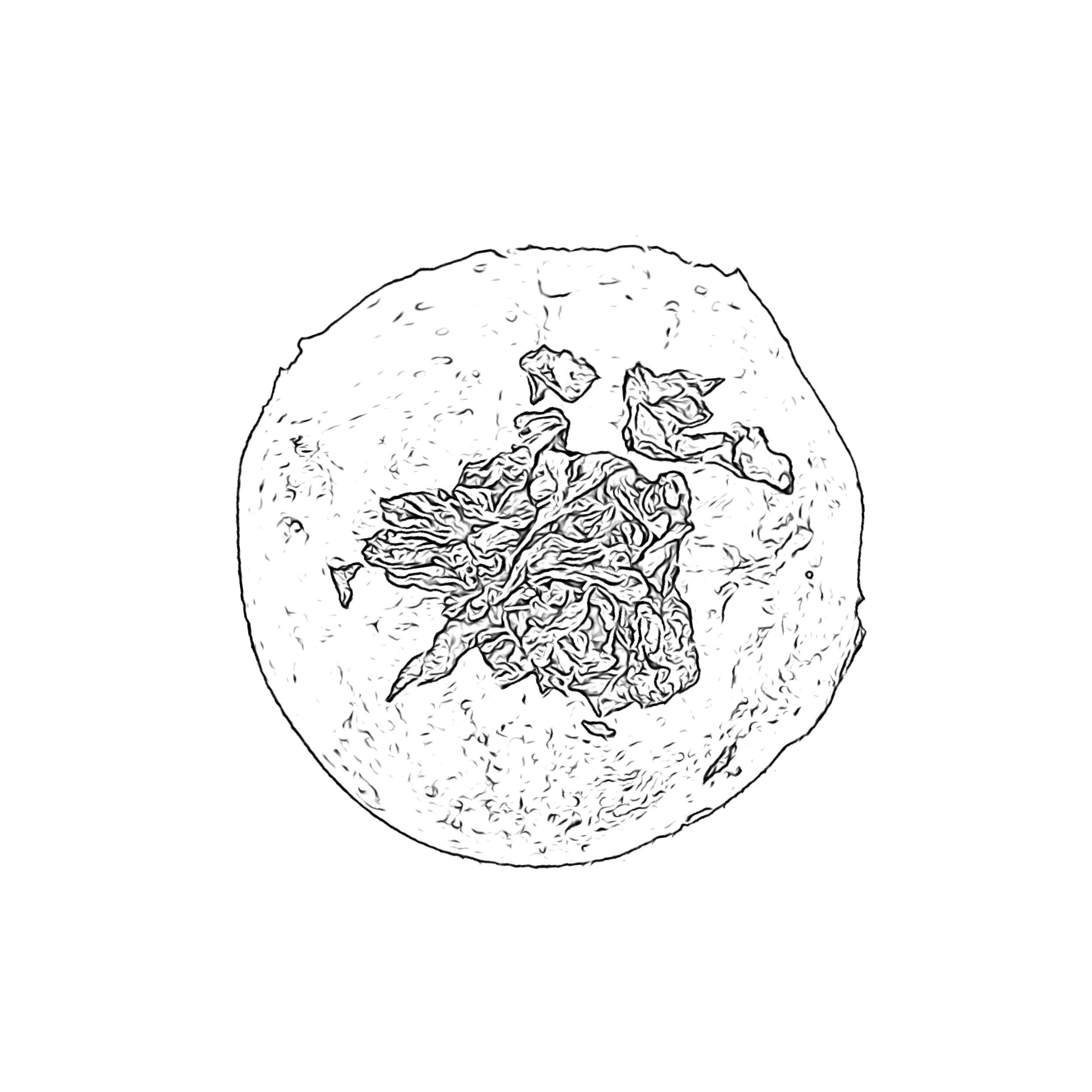Rella Sketch 2.JPG