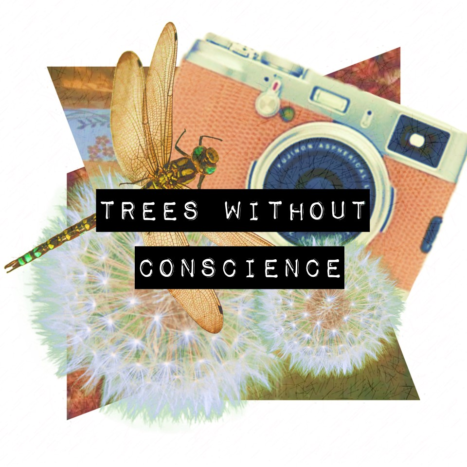 Trees Without Conscience.jpg