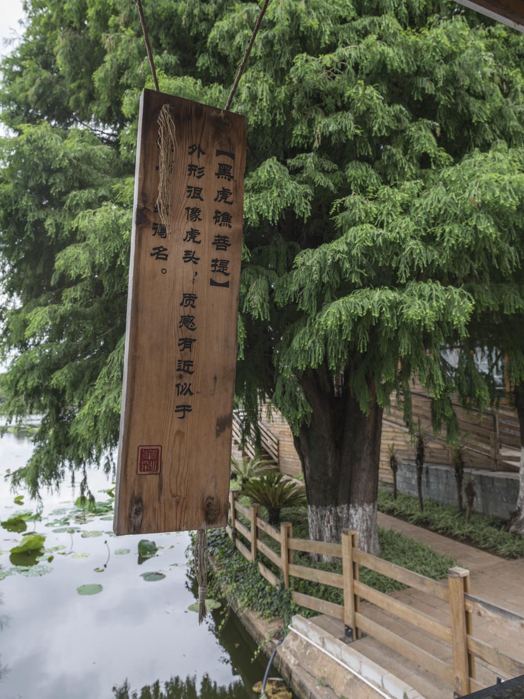 kunming8.jpg